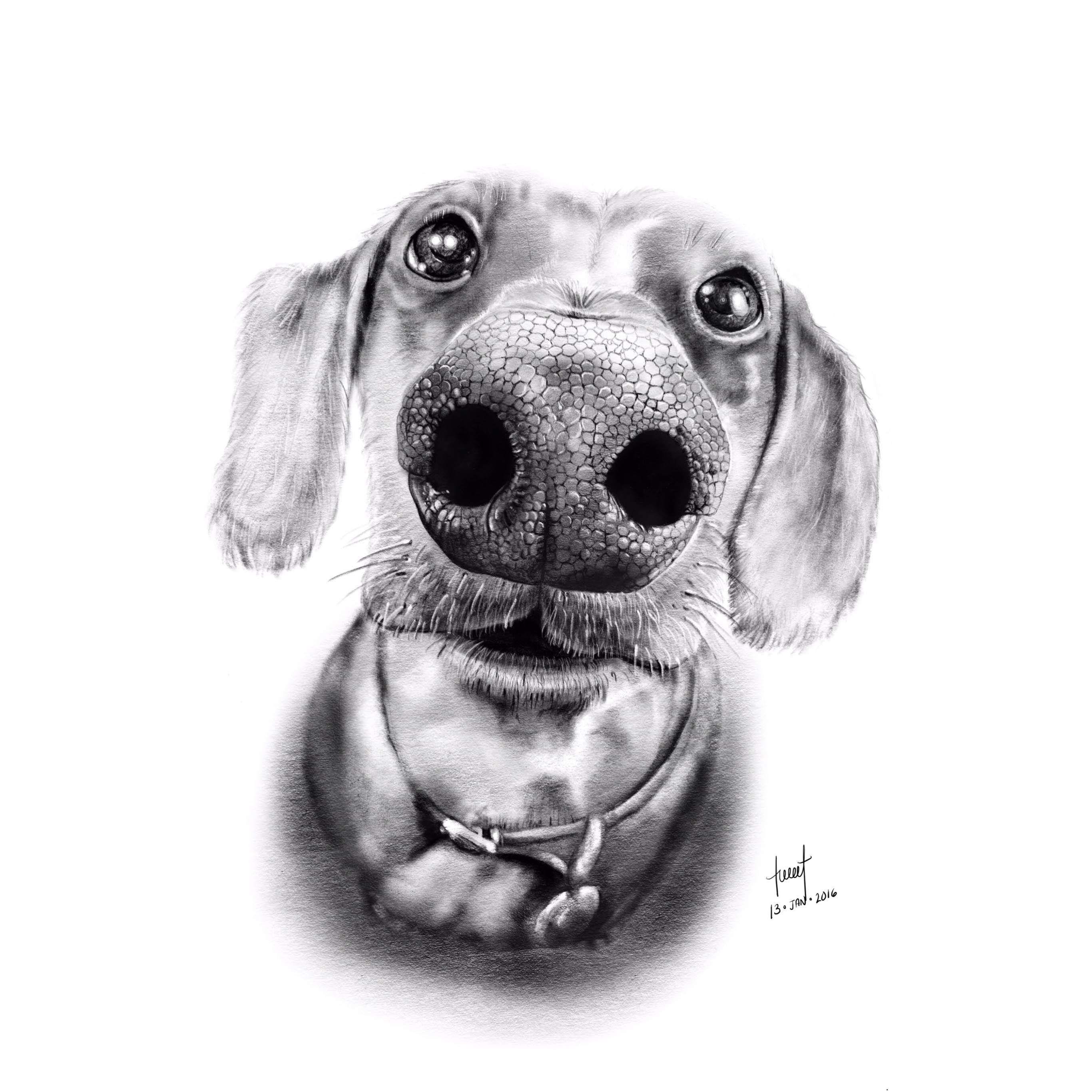 Pencil Illustration - Dog Nose Portrait