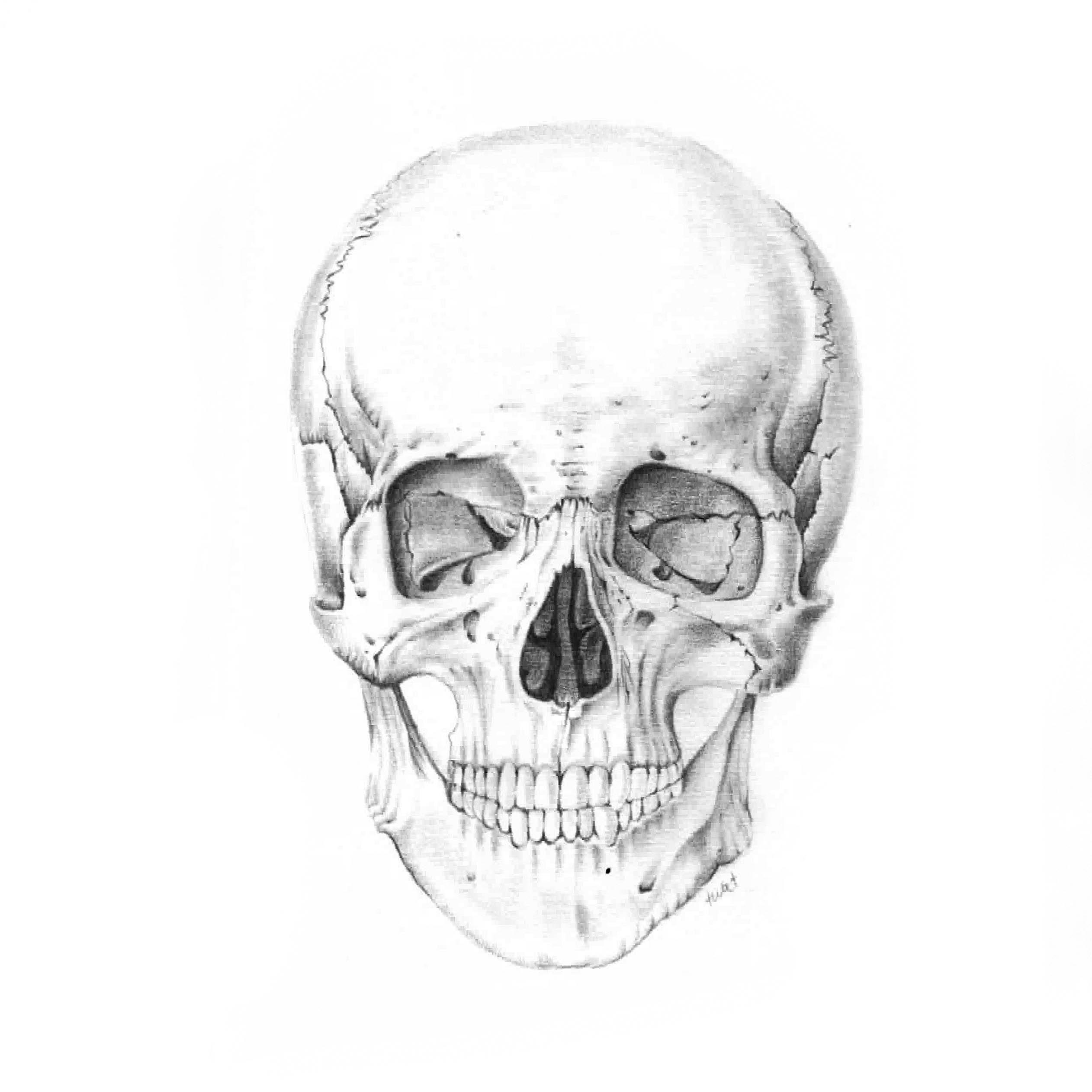 Pencil Illustration - Human Skull