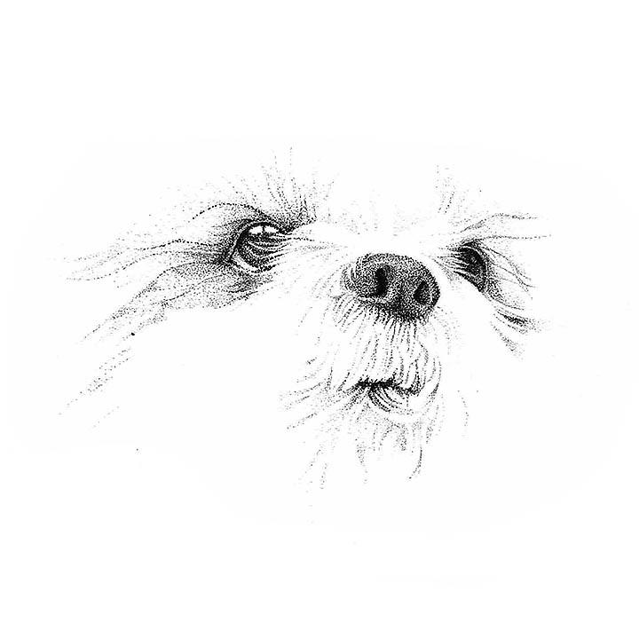 Pen Illustration - Stippling Marble the Dog