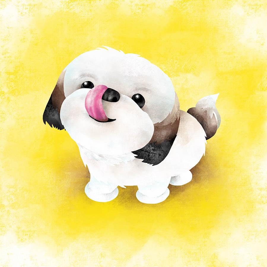 Colored Illustrations - Marble Dog Shih Tzu