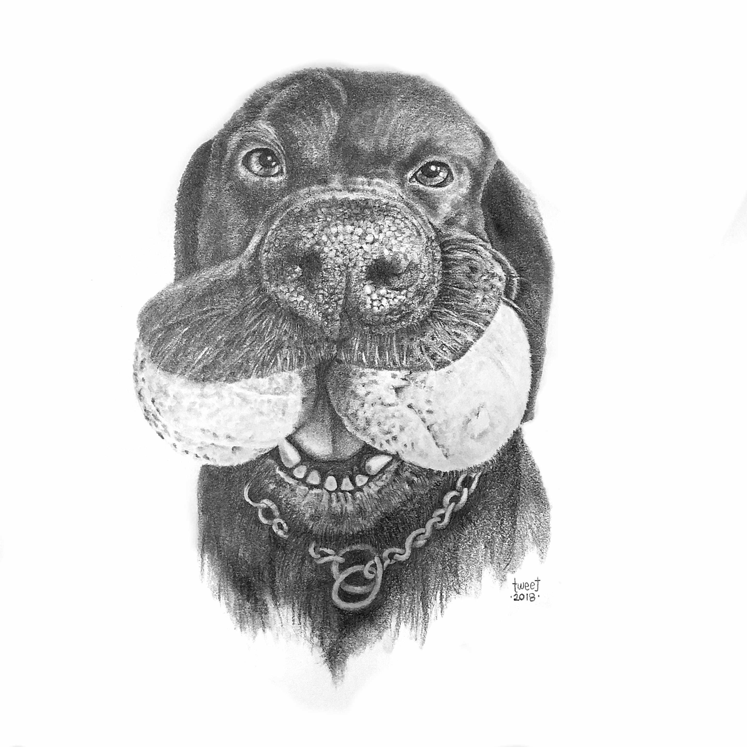 Fito - Dog Portrait